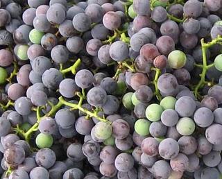 GrapesCloseUp1