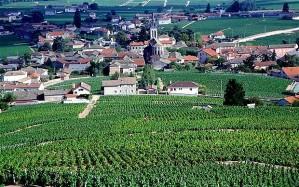Burgundy-vineyards_2306558b