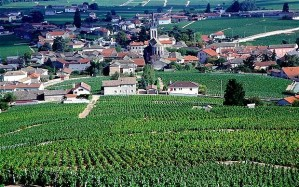 Burgundy-vineyards_2306558b